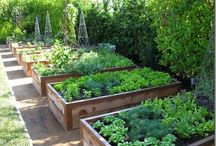 Gardening - raised beds