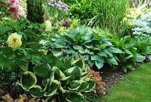 Gardening - shade garden ideas