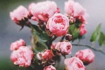 Flowers, Herbs, Gardens, Countryside / hopeless romantics  / by Vita Vi