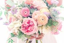 Florals / Florals & Blooms