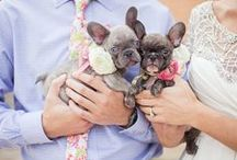 Pets in Weddings / by Artfully Wed - Wedding Blog