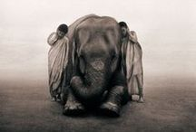 BLL's Photographer of the Moment - *Gregory Colbert* / Gregory Colbert has travelled the world and put together an awe inspiring collection of photographs and films of the interactions between animals and humans.