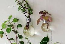 DIY - Upcycling - Glühbirnen
