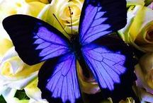 Butterfly & Papillons / by Jacques Safavi My virtual Museum