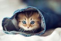 Zvířecí miláčkové / Zkoukněte ty nejroztomilejší zvířátka pohromadě.