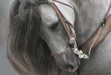 Koně / Uvidíte zde ty nejkrásnější koně.