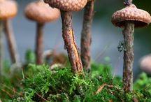 Natur inspiriert / Waldorf, Basteln, Filzen, Natur, Jahreszeitentisch, Jahreszeitenpuppen, Handwerk, Basteln mit Kindern, Blumen