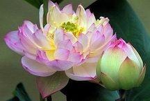 Flowers / by Carolyn Z