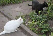 My cats. / Pamuk & Boncuk