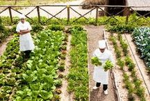 Kitchen Gardens / La Maison Maille's new Spring – Summer Collection revives fine cuisine of the past and revisits the French Royal Court's favourite ingredients to produce three new creations that draw inspiration from the French Royal Kitchen Garden (Le Potager du Roy). / by Maille