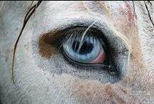 friends - horse eye