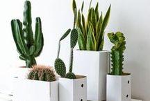 Cactus & Nature