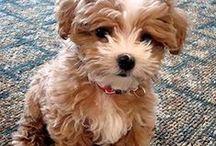 Cute puppies  / by Victoria Stoltz
