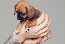 Pet Pics that Touch our Hearts / We love pics of our pets - and other people's pets! / by Handmade Pet Company