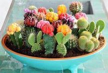 Cactus-Succulent
