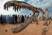 Paleontology / by John Tripp