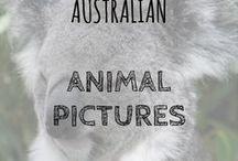 Australian Animal Pictures / Some of the most amazing animals in Australia, right here for your viewing pleasure!