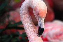 Flamingos... / by Allison
