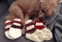 Socks and mittens by Jenni