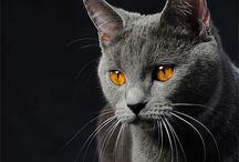 Cats - gatti
