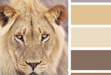 Colore - colours