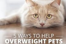 Cat Health / Keep your cat healthy and happy with these tips.
