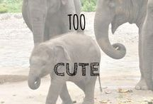 Too Cute! / Some of the cutest pictures you can find online, just to give you that 'ahhh' feeling. :-)