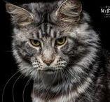 Nos Animaux Domestique - Photographe Evian Thonon / Vos animaux de compagnie pour une séance de shooting photo : chiens, chats, oiseaux... venez les photographier http://webmalin.ch/portfolio/shooting-photo-animaux-compagnie-evian/