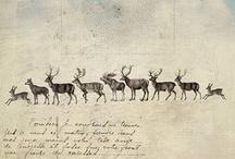 Deers & Mooses