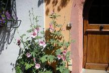 Les fleurs dans tous leurs états / J'aime les fleurs dans un jardin, un pré, un champ, un potager, une maison... Naturelles, cultivées, sauvages... Couleurs douces, éclatantes, discrètes.