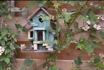 De gezellige tuin / Garden