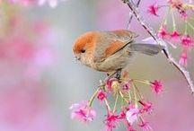 Lente! / Spring!