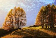 Природа   Nature
