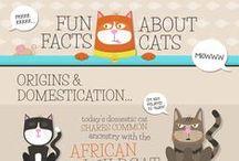 INTERESTING CAT INFOGRAPHICS