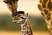 Zvířata / oblíbená zvířata