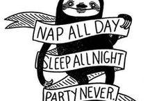 sloths & animal related stuff