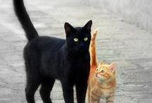 katten en katachtigen / zie boven