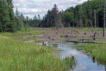 Mikisew Provincial Park, South River Ont.