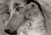 love || Dog and cats