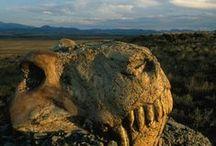 Permien 254,17 à 298,9 MA (Lopingien, Guadalupien, Cisuralien) / Ere: Paléozoïque (Primaire). Période: Permien. 3 époques: LOPINGIEN: *Changhsingien (254,17 +0,07) *Wuchiaping'ien (259,8 +0,4): extinction du Permien-Trias (95% des espèces marines, 70% des espèces terrestres). GUADALUPIEN (265,1 +0,4): *Wodien (268,1 +0,5) *Roadien (272,3 +0,5). CISURALIEN: *Kungurien (279,3 +0,6) *Artinskien (290,1 +0,26) *Sakmarien (295,0 +0,18) *Assélien (298,9 +0,15).