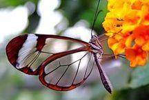 natureza / natureza: tudo que inspira