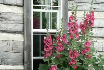 Garden Gates, Windows, and Doors / A collection of the rustic and the beautiful. / by Candy Thompson