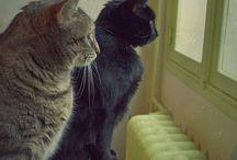 CATS OF ALL BREEDS / CATS HAVE ALWAYS BEEN MY BEST FRIENDS / by Eva Andersen