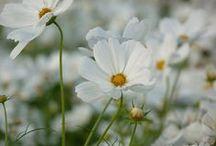 Valkeaa unelmaa / moon garden
