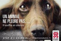 Animal, mon Ami...