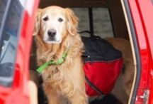 Traveling with Pets / All good pets deserve a vacation too!