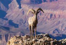 Northern Arizona Wildlife