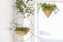Plants & Flowers / by She's Unique Jewelry Boutique