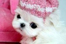 Cute!!!!!