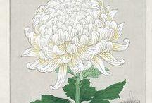 пионы и хризантемы